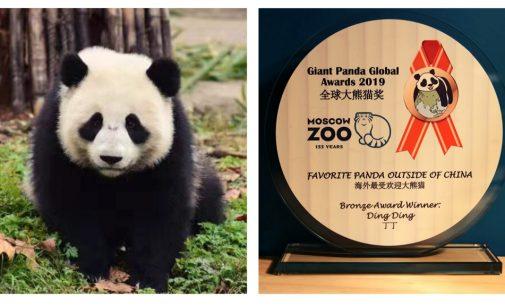 Московский зоопарк стал трижды лауреатом Международной панда-премии