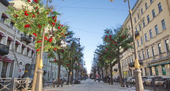 На Большой Конюшенной улице расцвели розы