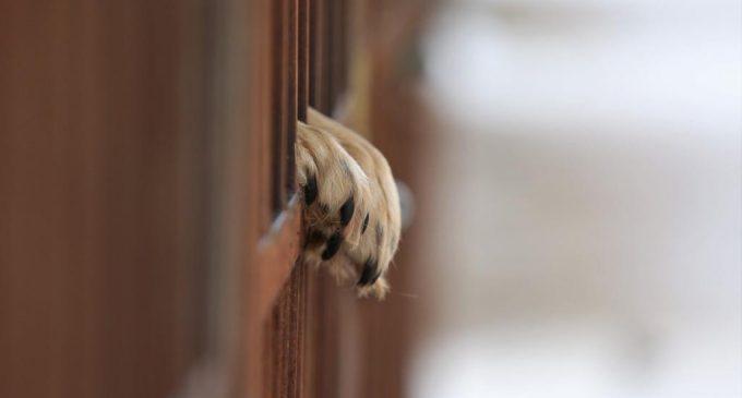 Более 37 миллионов рублей потратят в Сургуте на бездомных собак