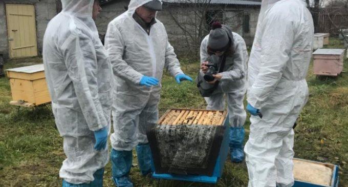 Пчеловоды получают поддержку