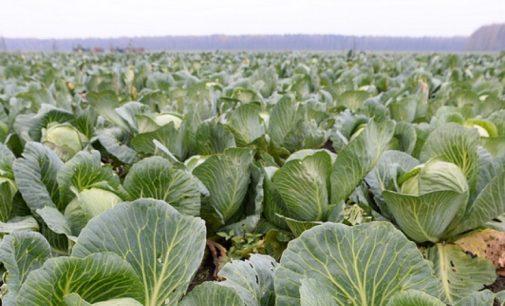 В Ленинградской области начался сбор урожая