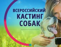Продолжается кастинг в дог-шоу «Лучший пёс»