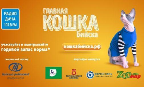 Конкурс «Главная кошка города» стартовал в Бийске