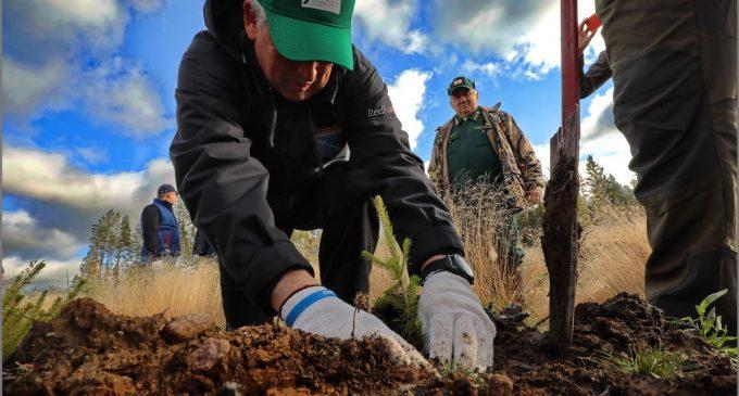 В области прибавилось 57 гектаров леса