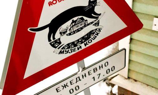 Музей Кошки стал финалистом конкурса Диво России 2020