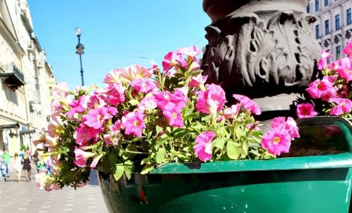 К майским праздникам город украсят полмиллиона цветов