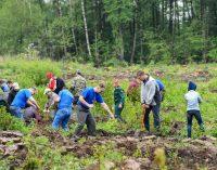 Добровольцев, восстанавливающих леса, наградят денежной премией