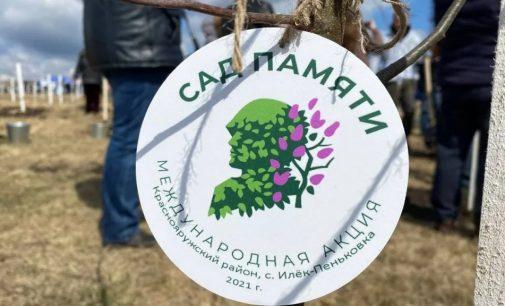 В Международной акции «Сад памяти» в 2021 году высажено уже 5 млн деревьев